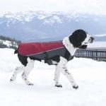 Dog Element Jacket