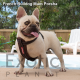 French Bulldog Dame - Porsha NFS